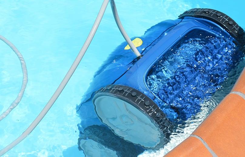"Swimming Pool ""Creepy Crawly"""