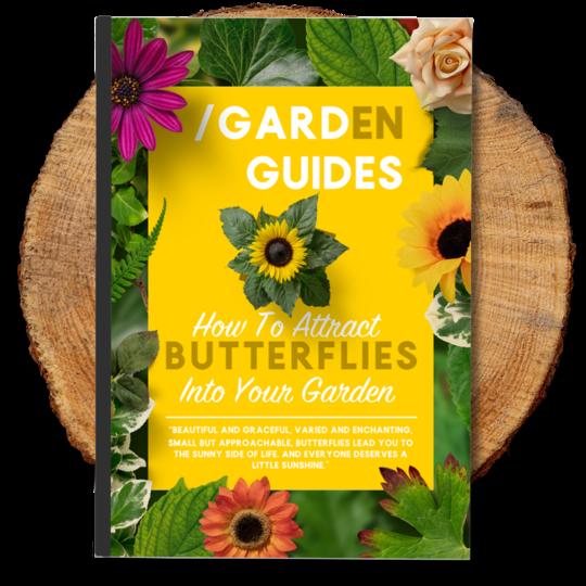Butterflies eBook