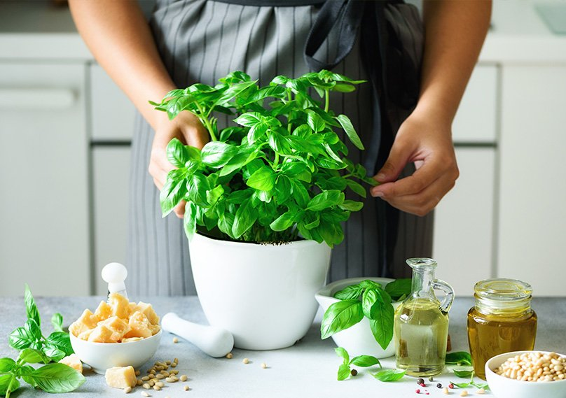 Grow Basil indoors and use in your cooking