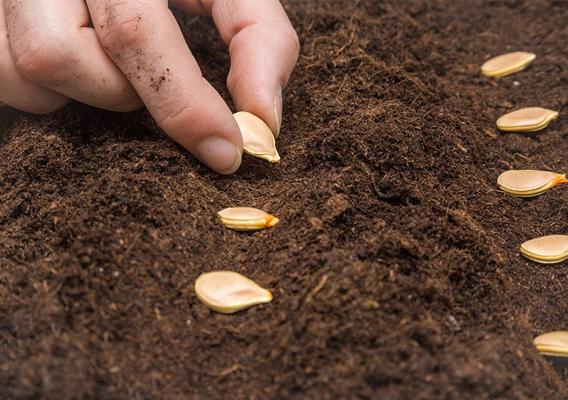 Space our your pumpkin seeds