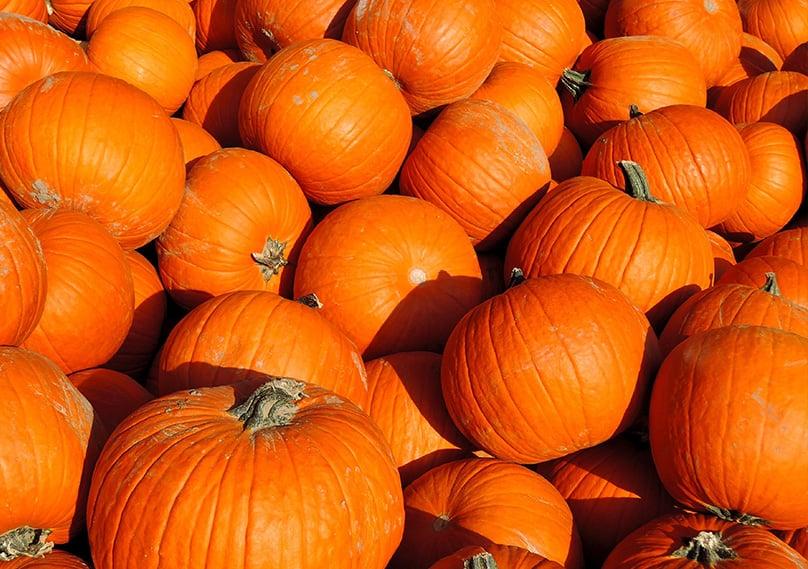 Pumpkins are an American favorite