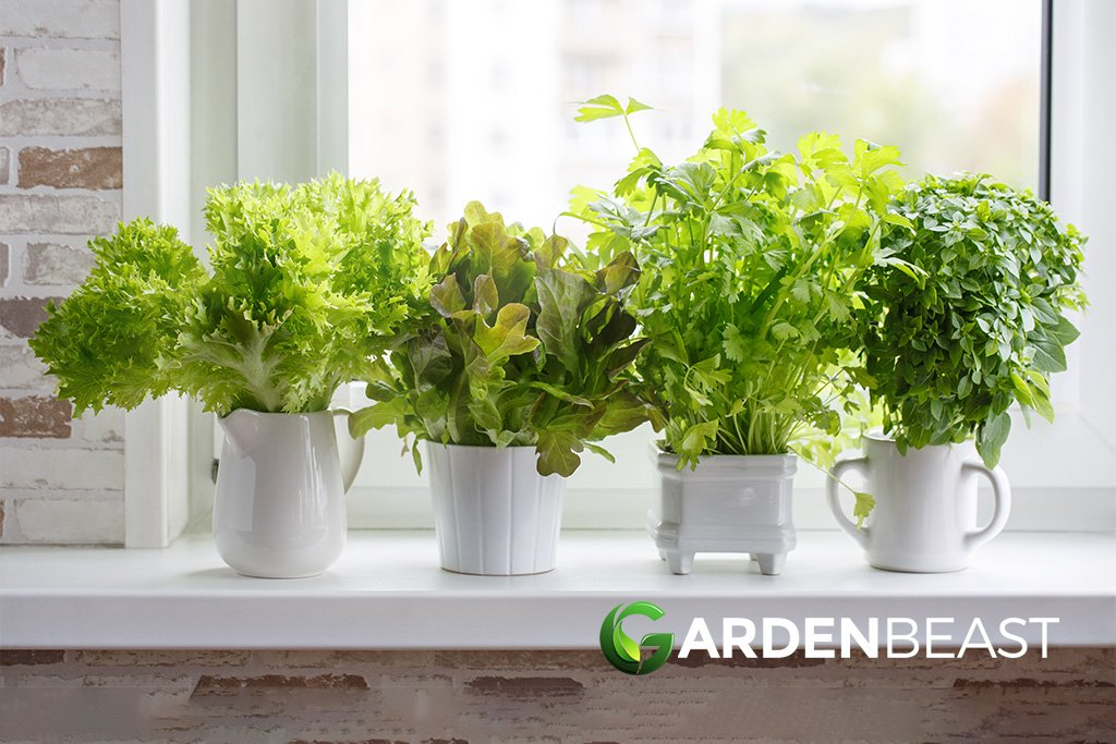 What are the Best Herbs to Grow at Home?