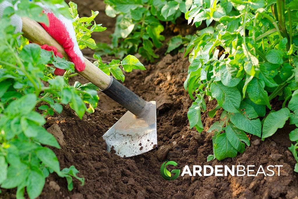 Best Garden Hoe Reviews: Complete Buyer's Guide