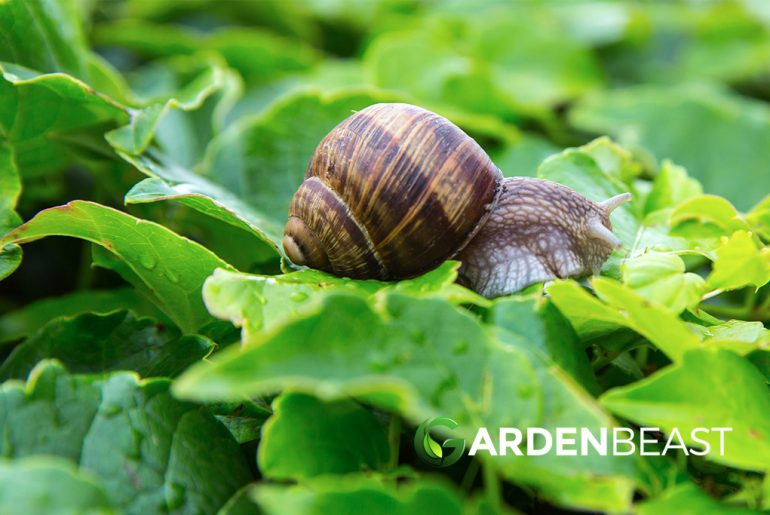How to Get Rid of Slugs & Snails