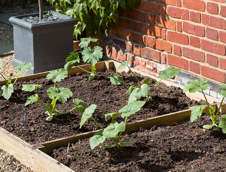 Planting Your Zucchini
