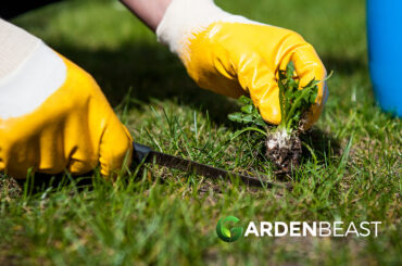 How to Get Rid of Weeds Naturally? 14 Organic Solutions