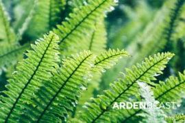 Propagate Ferns